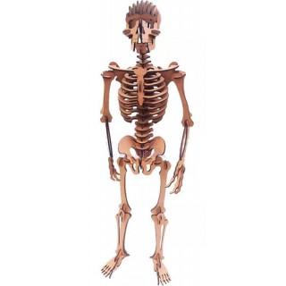Esqueleto de Montar, Quebra-Cabeça 3D, 119 peças, Brinquedo MDF