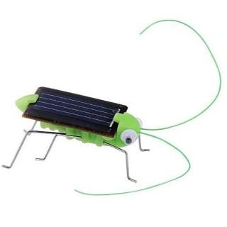 Grilo, Gafanhoto Movido A Energia Solar Educativo, Sem Pilhas, brinquedo ecológico
